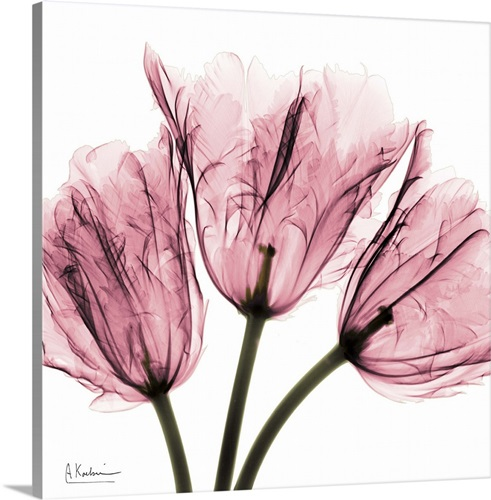 Tulip Rose Wall Art Painting For Kitchen Room Golden: Tulips Laugh II X-ray Photography Wall Art, Canvas Prints