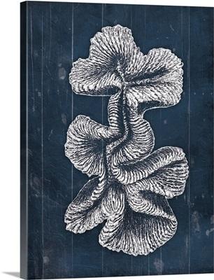 Wood Coral Blues VII