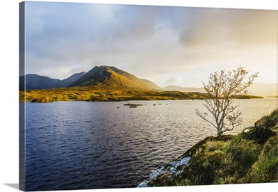A Bare Tree On The Banks Of Derryclare Lough, Sunrise, Connemara, County Galway, Ireland