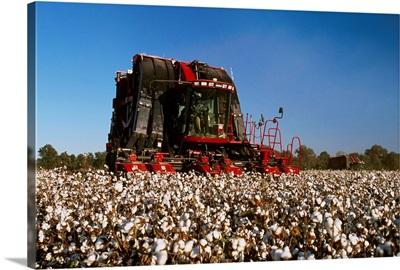 A Case IH Module Express 625 (on board module maker) cotton picker harvesting cotton