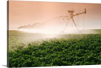 A Center Pivot Irrigation System Watering Potato Crop, Tiger Hills, Manitoba, Canada