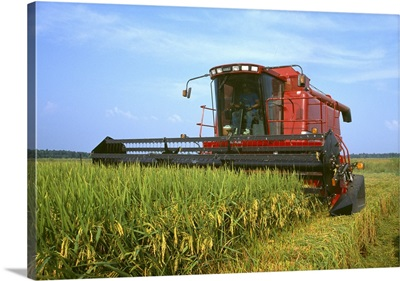 A combine harvesting mature rice, Southern USA