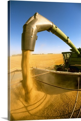 A combine unloads harvested barley into a grain truck for transport to a grain elevator