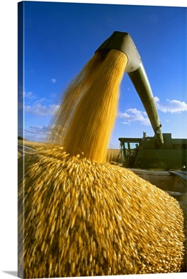 A combine unloads harvested grain corn into a truck for transport to a grain elevator