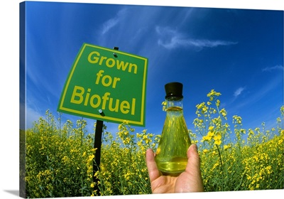 A flask of biodiesel made from canola next to a blooming canola field