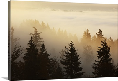 A Forest In The Valley With Fog At Sunrise, Happy Valley, Oregon