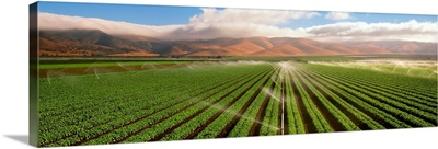 A Green Leaf lettuce field being sprinkler irrigated, with the Coastal mountains