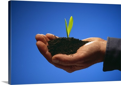 A hand holding a grain corn seedling growing in rich black soil