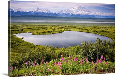 A kettle pond in summer tundra Mt. McKinley in the background, Denali National Park