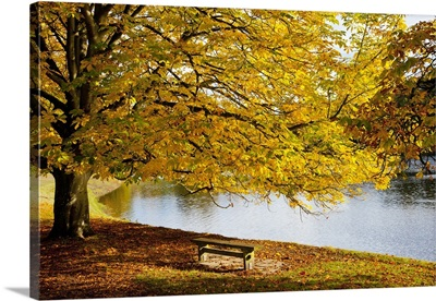 A Large Tree And Bench Along The Water In Autumn; North Yorkshire, England