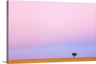 A Lone Tree Against The Horizon At Sunset, Kenya