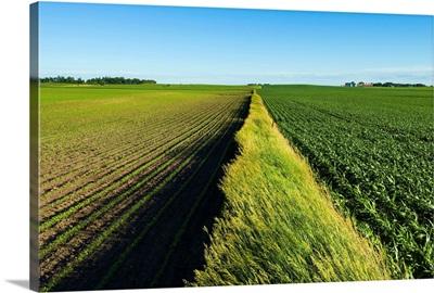 A newly planted soybean field and a green grain corn field, Iowa