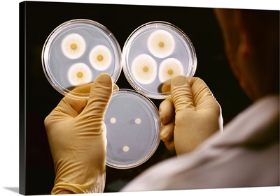 A researcher holds mold samples in petri dishes at an agricultural research laboratory