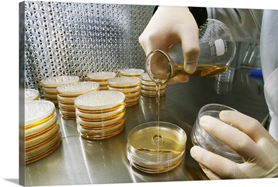 A researcher in an agriculture research laboratory prepares samples