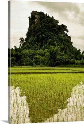 A Rice Field In Asia