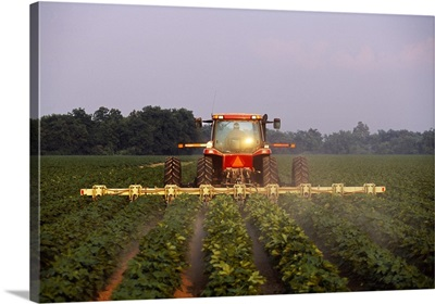 A tractor cultivates mid growth cotton in early morning light, Mississippi