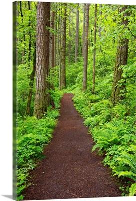 A Trail In Columbia River Gorge National Scenic Area; Oregon