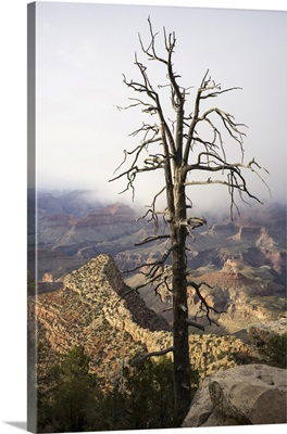 A View Of The Grand Canyon From Grandview Point., Grand Canyon National Park, Arizona
