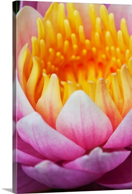 A water lily blooms in a pond