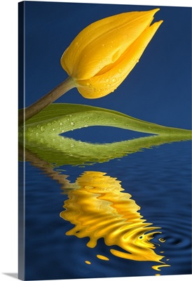 A Yellow Flower Reflected In Water