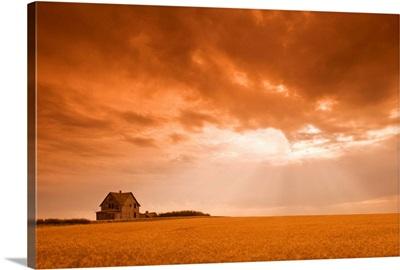 Abandoned Farm In Durum Wheat Field, Saskatchewan, Canada