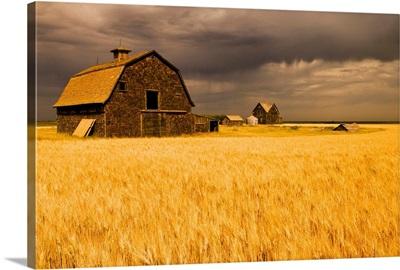 Abandoned Farm, Wind-Blown Durum Wheat Field, Saskatchewan, Canada