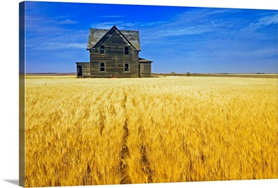 Abandoned Farmhouse In Wheat Field, Saskatchewan, Canada