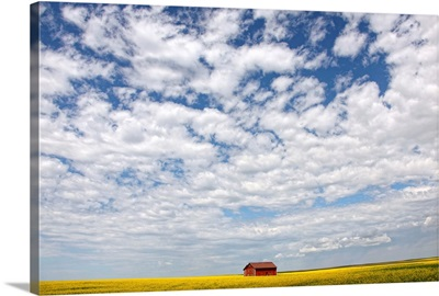 Abandoned Red Barn In The Midst Of A Canola Field, Saskatchewan, Canada