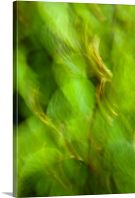 Abstract of a young Alder tree, Shoup Bay State Marine Park, Prince William Sound