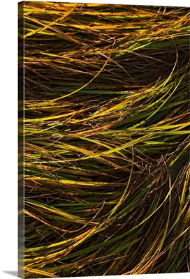 Abstract view of grass blowing in the wind