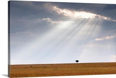 Acacia Tree, Kenya, Africa