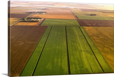 Aerial, sugar beet fields at different stages of harvest