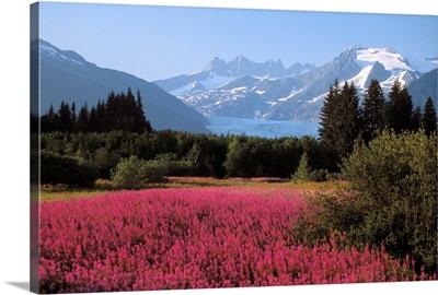 Alaska, Juneau, Mendenhall Valley, Tongass National Forest