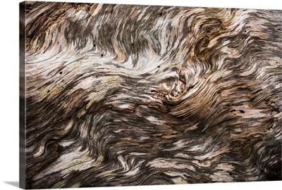 Amazing patterns on driftwood, Seaside, Oregon