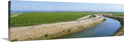 An irrigation canal winds between two table grape vineyards, Madera County, California