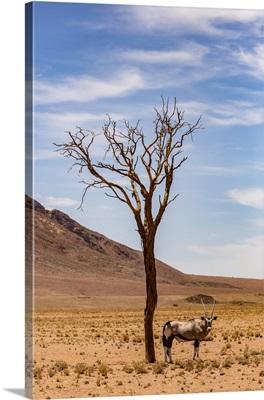 Antelope Stands Under A Tree In The Desert, Sossusvlei, Hardap Region, Namibia