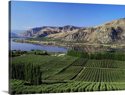 Apple orchards along the Columbia River, near Orondo, Washington