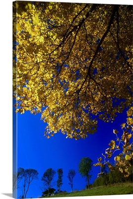 Ards Peninsula, County Donegal, Ireland; Autumn Foliage