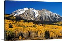 Aspen Trees In Autumn, Rocky Mountains, Colorado