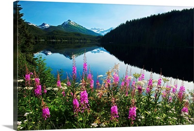 Auke Lake On A Clear Day With Fireweed In The Foreground, Alaska, Summer