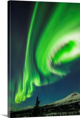 Aurora borealis over trees along the Denali Highway east of Cantwell, Alaska