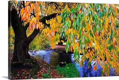Autumn Colors Along Johnson Creek At Westmorland Park, Portland, Oregon
