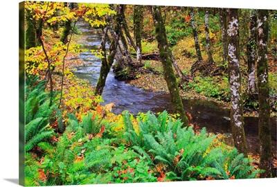 Autumn Colors Along Wolf Creek, Oregon Coast Range, Oregon