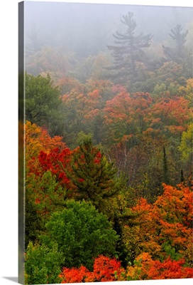 Autumn Colours In The Mist In Cottage Country, Ontario, Canada