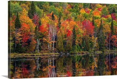 Autumn Foliage, Lac Labelle Region, Quebec, Canada