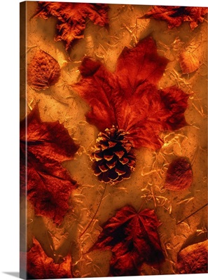 Autumn Maple Leaves And Pine Cone