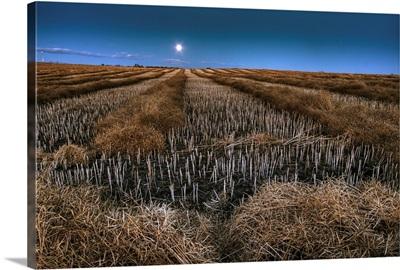 Autumn Moonrise On Canola Swaths, Alberta, Canada