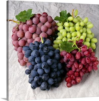 Autumn Royal black grapes, Red Globe, Thompson Seedless and Crimson Seedless