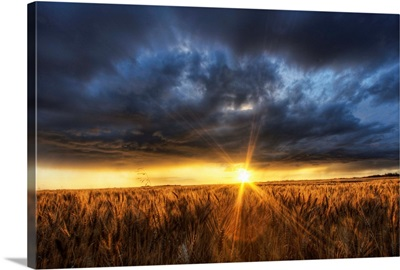 Autumn Sunset Over A Barley Field, Alberta, Canada
