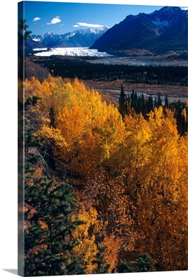 Autumn Trees over look melting glacier